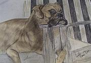 Boxer Dog Drawings Prints - Pencil and Coffee painting study Print by Caroline Owen-Doar