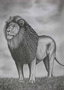 Fauna Drawings Originals - Pencil Drawings a Lion   by Luigi Carlo