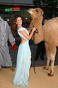 Penelope Cruz Framed Prints - Penelope Cruz, Camel At Arrivals Framed Print by Everett