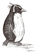 Penguin Drawings Framed Prints - Penguin Framed Print by Claire Budden