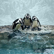 Square Tapestries Textiles - Penguins by Fotografias de Rodolfo Velasco
