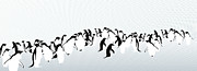 Flock Of Bird Art - Penguins by Maya Shleifer