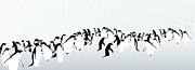 Penguins Print by Maya Shleifer