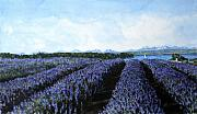 Cascade Mountains Prints - Penn Cove Lavender Print by Perry Woodfin