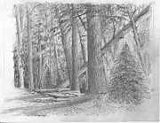 Jim Hubbard - Pennsylvania-Eastern Hemlock