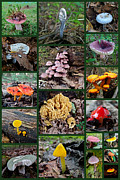 Blue Mushrooms Photo Posters - Pennsylvania Mushrooms Collage 2 Poster by Mother Nature