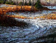 Montgomery Pastels Prints - Pennypack Woods in Winter Print by Bob Richey