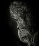 Animus Photography Prints - Pensive Print by Animus Photography