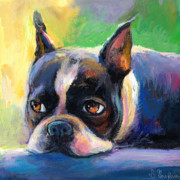 Puppy Drawings Framed Prints - Pensive Boston Terrier dog painting Framed Print by Svetlana Novikova