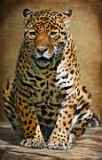 Jaguars Framed Prints - Pensive Framed Print by Lois Bryan