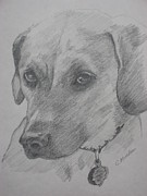 Dogs Drawings - Pensive Pup by Carol Mueller