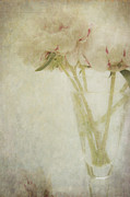 Layers Photos - Peonies by Marion Galt