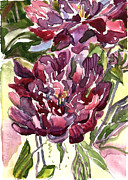 Red Wine Drawings Posters - Peonies Poster by Mindy Newman