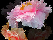 Gesture Digital Art Prints - Peony Fantasy Print by Lynda Lehmann