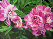 Floral Paintings - Peony Trilogy by Lee Nixon