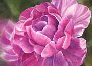 Purple Paintings - Peony Tulip by Sharon Freeman