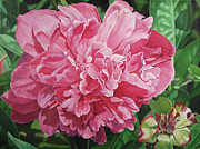 - Harlan - Peony with ant