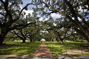 Oak Alley Plantation Photo Prints - People Walk Down A Brick Sidewalk Print by Hannele Lahti