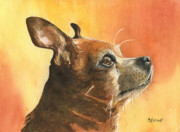 Chihuahua Paintings - Pepe by Marsha Elliott