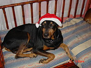 Dobermann Posters - Pepe With Christmas Cap Poster by Thomas D McManus