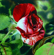 Photorealistic Painting Posters - Peppermint Rose Poster by Arena Shawn