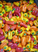 Kitchen Photos Photo Prints - Peppers Print by David Bearden
