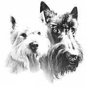 Scottish Terrier Digital Art - Pepsi and Max by Charmaine Zoe