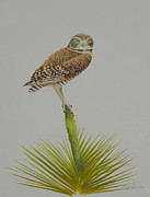 Falcon Mixed Media Originals - Perched by Alan Suliber