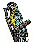 Macaw Mixed Media - Perched Blue and Gold Macaw by Jennifer LaBombard