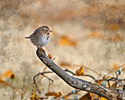 Perched High - Baby Sparrow Print by J Larry Walker