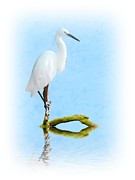Egret Metal Prints - Perched Metal Print by Sharon Lisa Clarke