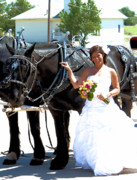 Horses In Harness Prints - Percheron horses and a Bride Print by Cheryl Poland