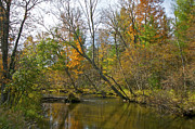 Fall River Scenes Posters - Pere Marquette  in Fall Poster by Sheryl Thomas