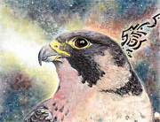 Falcon Mixed Media - Peregrine Falcon by Christine Marsh