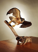 Animal Sculpture Posters - Peregrine Falcon  Poster by Monte Burzynski