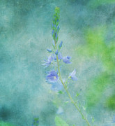 Garden Flowers Photos - Perfect Dream by Kim Hojnacki