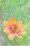 Butterfly Painting Prints - Perfect Peach Print by JQ Licensing