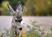 Wisconsin Wildflowers Prints - Perfect Pose Print by Nava Jo Thompson
