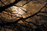 Perigee Moon In The Trees Print by Tamyra Ayles