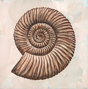 Invertebrate Prints - Perisphinctes Ammonite, Artwork Print by Richard Bizley