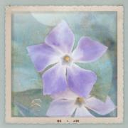 Major Mixed Media Framed Prints - Periwinkle Stars Framed Print by Cindy Garber Iverson