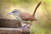 Perky Prints - Perky Little Wren Print by Bonnie Barry
