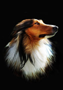 Collie Digital Art Metal Prints - Persephone Metal Print by Julie L Hoddinott