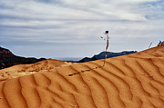 Sanddunes Photo Posters - Perseverance Poster by Stephen Campbell