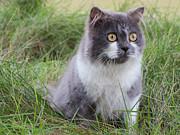Nawarat Namphon Photos - Persian cat sit in green yard by Nawarat Namphon
