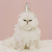 Party Hat Posters - Persian Cat Wearing Party Hat And Ruffle Poster by GK Hart/Vikki Hart