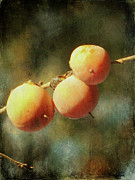 Aqua Blue Posters - Persimmons Poster by Amy Tyler