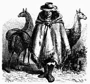 Peruvian Llama Prints - Peru: Llama Driver, 1869 Print by Granger