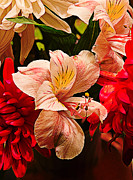 Peruvian Lily Grain Print by Bill Tiepelman