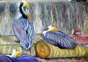Yellows Pastels Prints - Peruvian Pelicans Three Pastel Print by Antonia Citrino